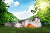 Cat resting after successful fishing on the grass — Stock Photo