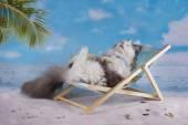 Cat in a swimsuit sunbathe on the beach — Stock Photo