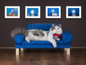 Lazy cat is resting on the couch — ストック写真