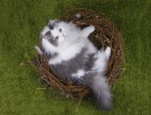 Cat in a bird's nest on the green grass — Stock Photo