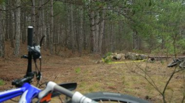 EDITORIAL. Group Of Cyclists Moving In The Distance In Pine Forest — Stock Video