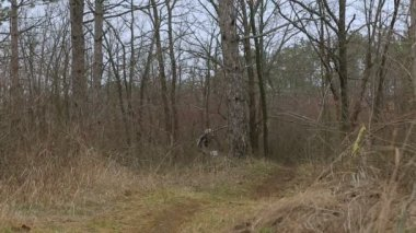 EDITORIAL. Two Mountain Bikers Racing In Forest — Stock Video