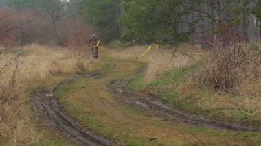 EDITORIAL. Two Cyclists Moving Into The Distance In Pine Forest — Stock Video
