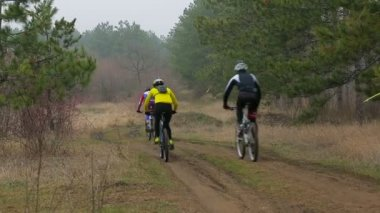 EDITORIAL. Group Of Three Cyclists Moving In The Distance In Pine Forest — Stock Video