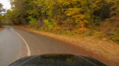 One Passenger Car Driving Fast Along Road In Autumn Forest — Stock Video