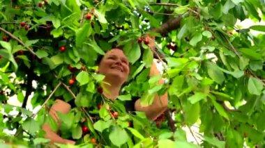 Mulher feliz, colhendo cerejas no jardim — Vídeo stock