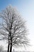 Landscape with hoarfrost, frost and snow — Stock Photo