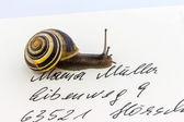 Snail on envelope — Stock Photo