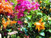 Various cut flowers, background — Foto de Stock