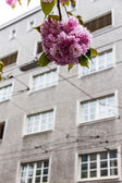 Flowering tree and building — Stock Photo