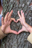 Courting couple behind a tree — Stok fotoğraf