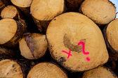 Vice-cut tree trunks — Stock Photo