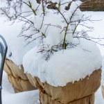 Snow flower pots — Stock Photo #60933899