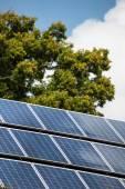 Solar panels and tree — Stock Photo