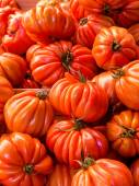 Tomates beefsteak — Photo