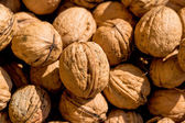 Many walnuts close-up — Stock Photo