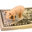 Pig on dollar banknotes — Stock Photo #63062625