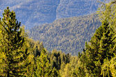View over coniferous forests — Stock Photo