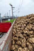 Sugar beet and freight — Foto de Stock