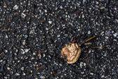 Rotting fruit on stone — Stock Photo