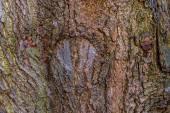 Corteza de un árbol viejo — Foto de Stock