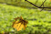 A leaf in autumn — Stock Photo