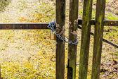Closed fence — Stock Photo