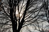 Tree in the evening sun — Stock Photo