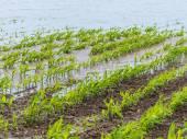 Floods 2013 — Stock Photo