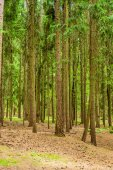 Trees in the forest — Stock Photo