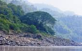 Forests in Laos in the area of the river Mekkong — Stock Photo