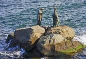 Bronze statues located in the port of Hobart — Stock Photo