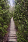 Track in Cradle Mountain - Tasmania (Australia) — Stock Photo