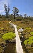 Seguimiento en los muros de Jerusalén - Tasmania (Australia) — Foto de Stock