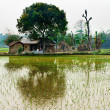 Green rice field and hut, Nepal — Stock Photo #52412607