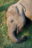 Elephant Breeding Centre in Chitwan — Stock Photo