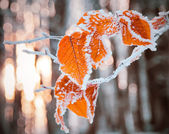 leaves  covered with snow  — Стоковое фото