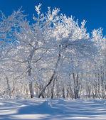 美丽的冬天森林 — 图库照片