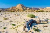 Desert hot landscape — Stock Photo