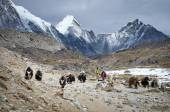 Yaks on  trail — Stock Photo