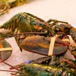 Good fresh lobster — Stock Photo #61279401