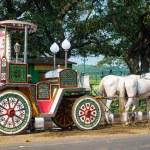 Horses carriage  in Kolkata — Stock Photo #63044053