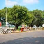 Horses carriage  in Kolkata — Stock Photo #63044503