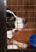 Dog sitting in a cage.  — Stock Photo