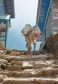 Donkey in mountains village — Stock Photo