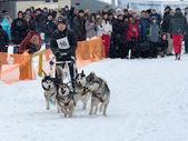 Sled Dog Race — Stock Photo