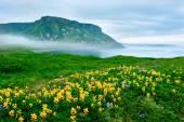 Landscape at Paramushir Island — Stock Photo