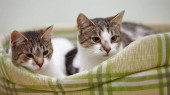Portrait of two cats. — Stock Photo