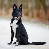 Black Doggie on walk. — Stock Photo