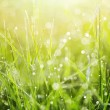 Fresh green grass with dew. — Stock Photo #62817311